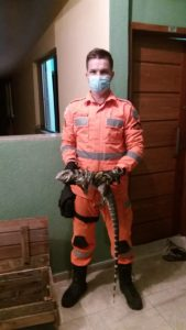 Bombeiros capturam lagarto no em residência