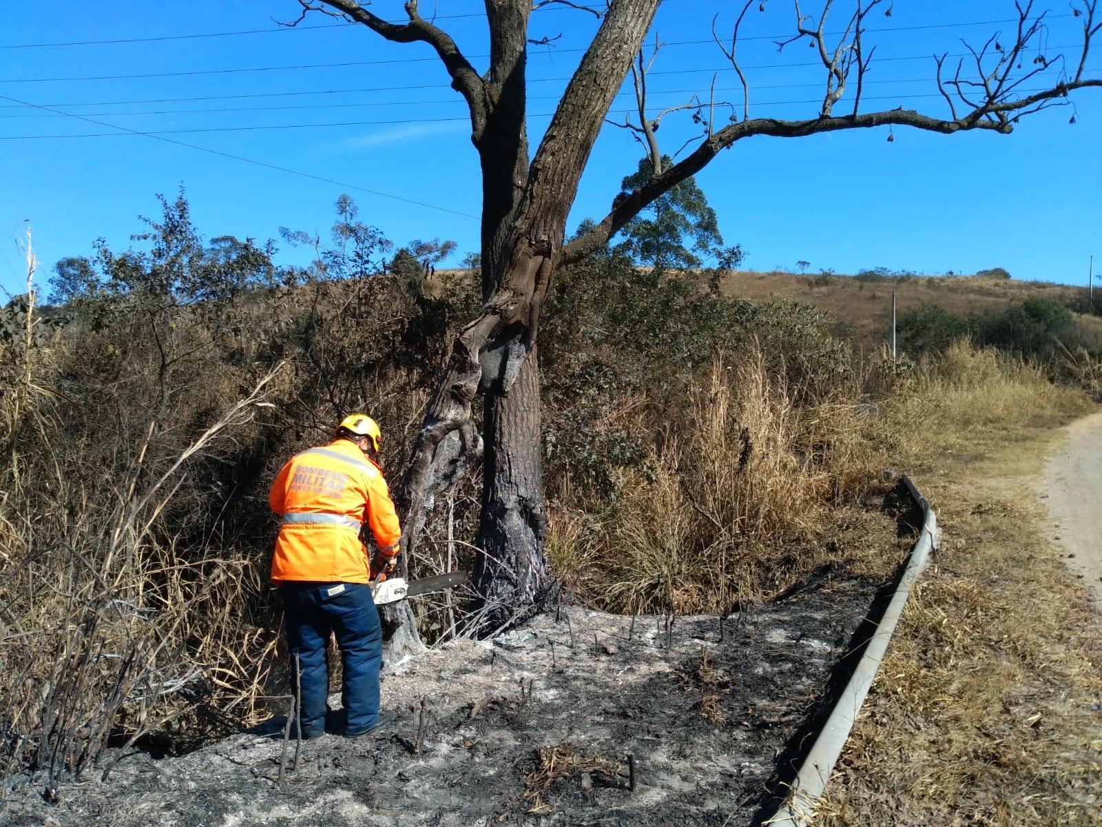 Queimada atinge árvore e coloca em risco segurança em rodovia