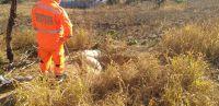 Bombeiros resgatam cavalo caído em buraco